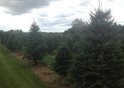 Newby's Tree Farm